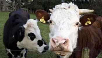 """Canadá denunció nuevo caso de """"vaca loca"""" esta semana"""