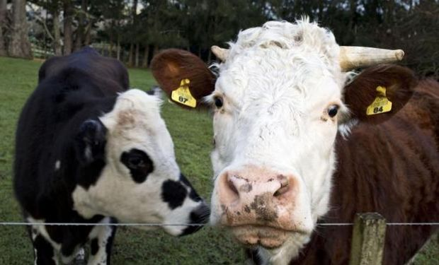 La encelofalopatía bovina apareció en el Reino Unido en la década del 80. Foto: Reuters