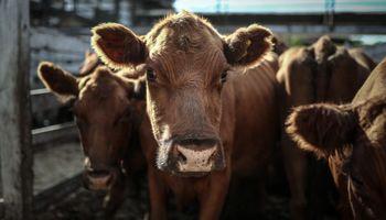 """Dura advertencia por la carne: """"Va a convenir dejar que la vaca muera en el campo"""""""