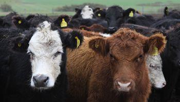 Vaca loca en Brasil: cómo impacta en el estatus sanitario de Argentina