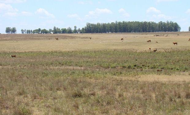 La ganadería del NEA se enfrentará a un escenario complejo por la escasez de lluvias