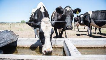 Altas temperaturas: cuidados para proteger al ganado del estrés calórico
