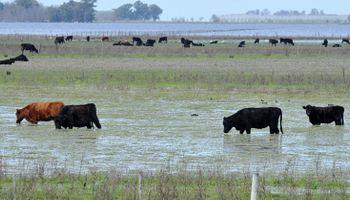 Recomendaciones sanitarias para el ganado en condiciones de exceso hídrico