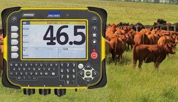 El uso de datos e información para tomar las mejores decisiones en ganadería