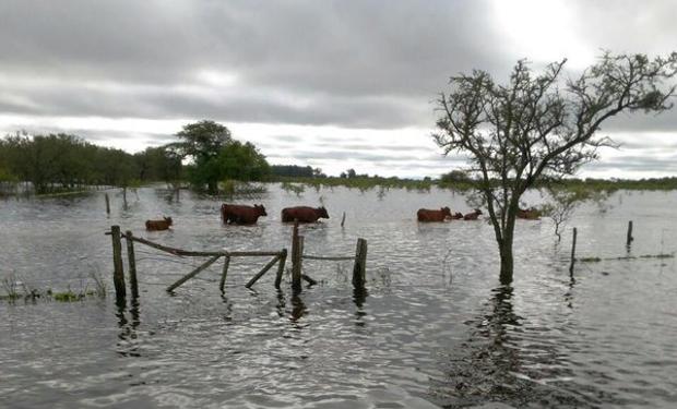 Bajaron las aguas en el nordeste de la provincia, pero se agravan las pérdidas.