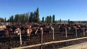 La UE reconoce a la Patagonia Norte A como región libre de aftosa sin vacunación
