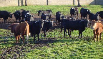 Secuencian el genoma de un virus de la alfalfa