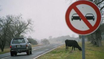 En contaminación, las vaquitas de Córdoba le ganan a los autos