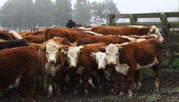 Senasa convocó a una consulta pública para fijar una estrategia nacional contra la brucelosis bovina
