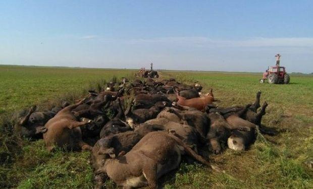 Cerca de 200 animales murieron en La Pampa.