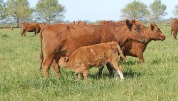 Con el ascenso de Scioli las vacas dejaron de ganarle a la inflación