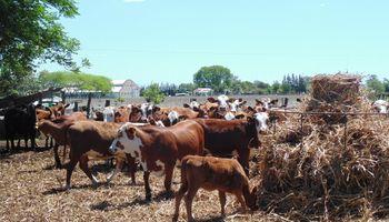 Los productores reponen hacienda para asegurar su capital