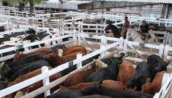 Las vacas, marcaron preferencia en la semana