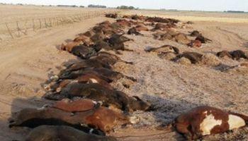 Más de 200 vacas murieron intoxicadas