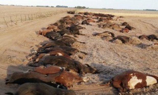 Más de 200 vacas murieron intoxicadas por un herbicida.