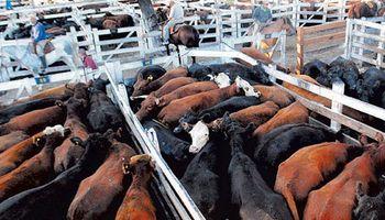 La exportación impulsó la suba de las vacas