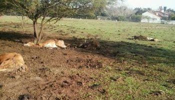 Denuncian misteriosas muertes de animales en un campo