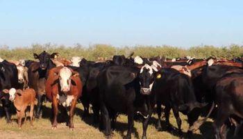 Santa Fe: otorgarán hasta 15 mil dólares para financiar inversión en tecnología ganadera