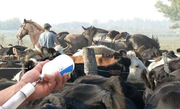 Alrededor del 86% del territorio de América del Sur goza del estatus de países o zonas libres de fiebre aftosa con vacunación.