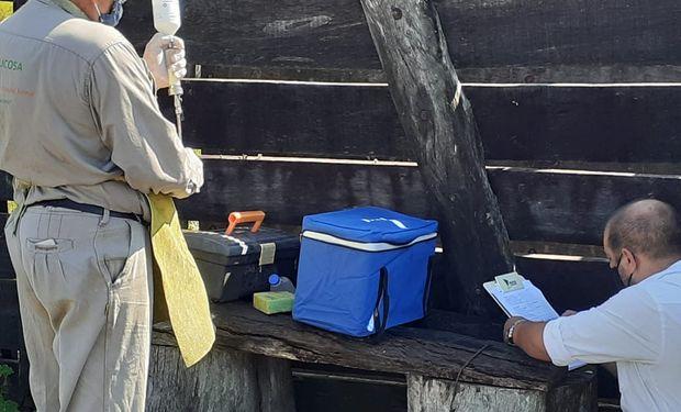 Aftosa: refuerzan los controles en la frontera con vacunas gratuitas
