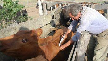 Santa Fe: se inicia la campaña de vacunación antiaftosa