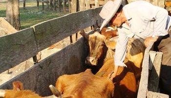 Buenos Aires unificará el calendario de vacunación de ganado