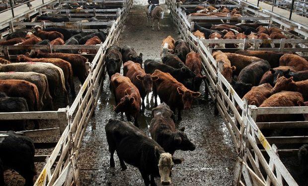 Crecimiento de precios en los mercados ganaderos.