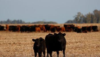 Las razones detrás del desplome en la venta de campos