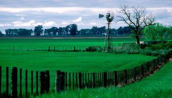 Se reactivan las consultas en el mercado inmobiliario rural: dólar y granos entre las razones del repunte