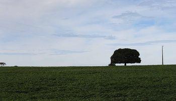 Argentinos venden sus campos en Uruguay