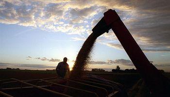 Venta anticipada de cereales ya es siete veces superior a la de 2015