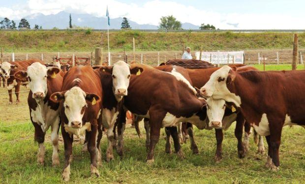 Carnes: buscan extender el blanqueo en la cadena.