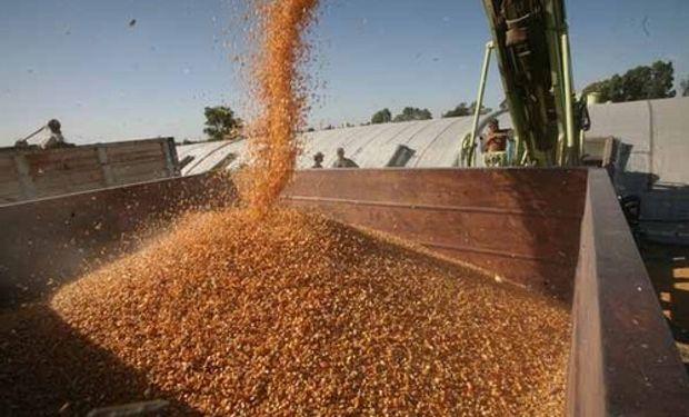 Se derrumbó un 67% la exportación de maíz