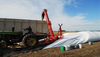 ¿Cómo viene la comercialización de la cosecha récord de soja?