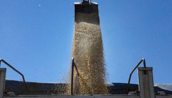 Entre soja, maíz y trigo se vendió un 30 % más que el año pasado