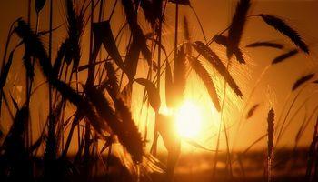 La venta de trigo a Brasil es la más baja en 24 años