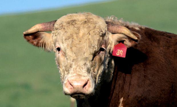 El valor de venta de los animales por venta forzosa se determinará por cada especie y categoría.