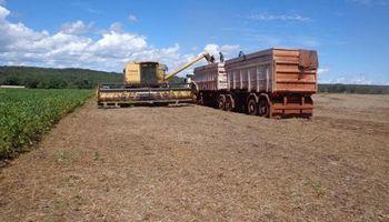 Brasil: productores ya vendieron la mitad de la cosecha de soja