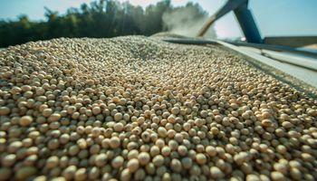 """Buryaile: """"La oferta de soja se normalizará en los próximos días"""""""