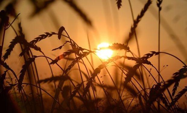 La exportación compró 1,7 millones de toneladas de trigo.