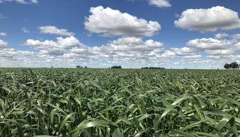 Ya están comprometidas 8 millones de toneladas de la cosecha 2020/21 de soja, trigo y maíz