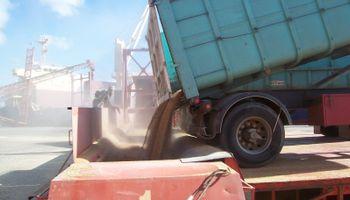 Trigo: menos compras de exportadores y de molinos