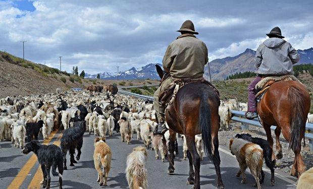 Por una práctica ancestral, rebaños de ovejas se apoderaron de las calles de España y Turquía