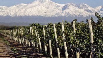 Estiman una producción de uvas de 23,1 millones de quintales para esta vendimia