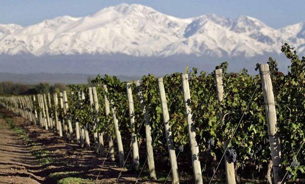 Estiman cosechar entre 14,1 y 14,8 millones de quintales para la Vendimia 2018 de Mendoza.