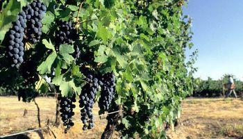 La vitivinicultura le planteó su agenda estratégica a Basterra