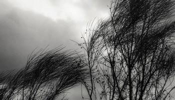 Alerta del SMN: quince provincias se ven afectadas por vientos fuertes