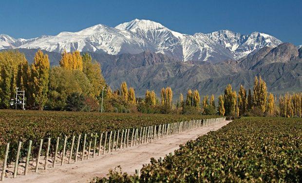 Viñedos en Mendoza, junto al Cordón del Plata.