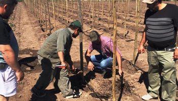 Inédito: un productor se lanzó a armar un viñedo en la provincia de Santa Fe