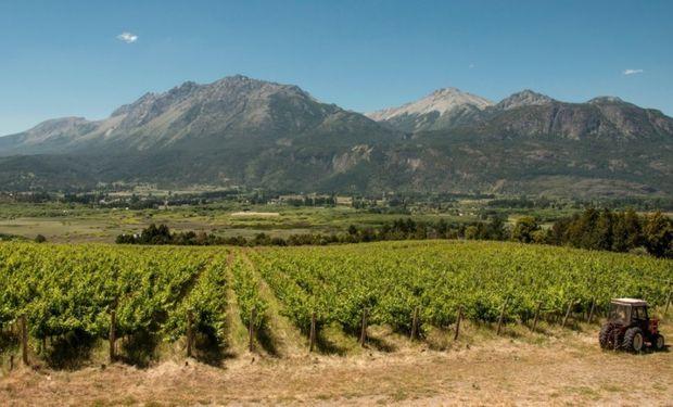 La producción vinícola está en manos de pequeñas chacras de productores, que trabajan muy artesanalmente.